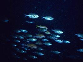 海底温泉の画像